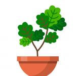 Terrarium Garden Idle  1.26.12 (mod)