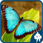 Butterfly Jigsaw Puzzles (mod) 1.9.17